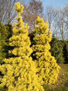Thuja Smaragd, River, Plants, Outdoor, Outdoors, Plant, Outdoor Games, The Great Outdoors, Rivers