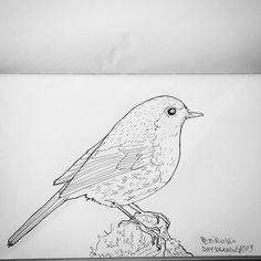 "Rusty Raf (@la_raf_art) su Instagram: ""Daily #drawing #pettirosso #robin #bird #illustration #disegno #ink #illustrazione #pilotpens"""