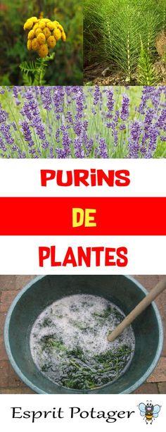 Purins de plantes : Fabrication, utilisation et conservation - Esprit Potager