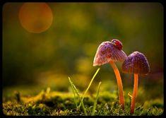 So peacefully beautiful...the lady bug and the mushroom.