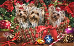 --Yorkshire Terrier - Deck the Halls