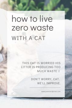 Low waste living look at the cat in this photo - hes worried hes creating too much waste. dont worry him more - hes already worried hell never be able to catch the laser light. here are some tips to live a low-waste lifestyle Plastik Recycling, Natural Cat Litter, Waste Reduction, Green Living Tips, Natural Cleaners, Pet Care Tips, Buy A Cat, Zero Waste, Recycling