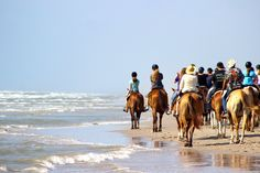 Horses on the Beach? Yes you can do that at the beach house in Port Aransas!