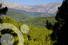 Extensive pine forests in the southern slope, near #Guisando. Find all the information to plan your trip to #gredos in ww.qnatur.com