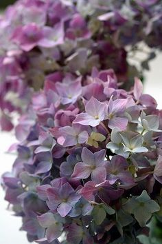 "bellasecretgarden: "" (via Hydrangeas | Love Me Love Me Not! {Flowers} | Pinterest | Hydrangeas, Memories and Purple) """