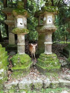 Kasuga Shrine, Nara. Where hundreds of friendly deer roam free! Japan Itinerary- 7 or 10 Days! - Have Seat Will Travel