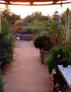 Green Roof Benefits, Balcony Flowers, Health Guru, Womens Health Magazine, Terrace Garden, Terrace Ideas, Growing Herbs, Terrazzo, Relax
