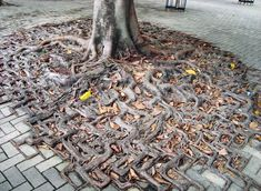 Paving stones cannot hold trees back
