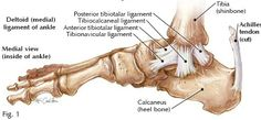 Physical therapy for medial ankle sprain Physical Therapy Exercises, Physical Therapist, Broken Ankle Recovery, Ankle Anatomy, Ankle Ligaments, Ankle Surgery, Sprained Ankle, Bones And Muscles, Bone And Joint
