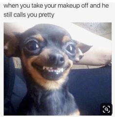 Funny Dogs That Will Make Your Day Source by wackyypics dog dog memes dog videos videos wallpaper dog memes dog quotes dogs dogs pictures dogs videos puppies puppy video Funny Animal Jokes, Really Funny Memes, Cute Funny Animals, Stupid Funny Memes, Funny Relatable Memes, Cute Baby Animals, Funny Dogs, Cute Dogs, Funny Quotes