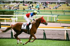2014.10.12 Tokyo Race Course  photo by teitania