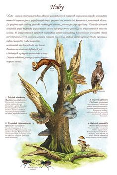 TE-55 - Zunderpilze Learn Polish, Wildlife, Knowledge, Science, Education, School, Illustration, Outdoor, Art