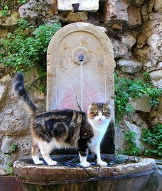 Le chat, Saint-Paul de Vence (France)--Excuse me, but this is a private shower...oops, I mean fountain.