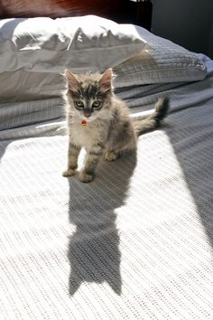 """""""A cat will allow you to sleep on the bed--on the edge."""" --Jenny DeVries"""