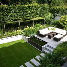 Modern garden with a pleached hedge