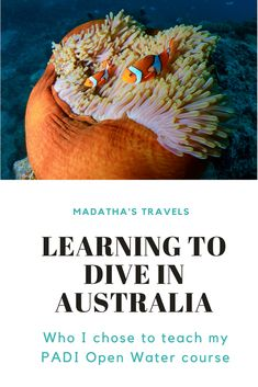 Read about my amazing diving experience in Cairns and why I think you should learn to dive on The Great Barrier Reef!  #australia #queensland #cairns #thegreatbarrierreef #PADI #diving #underwater #diversden #coralreef #marinebiology #openwater