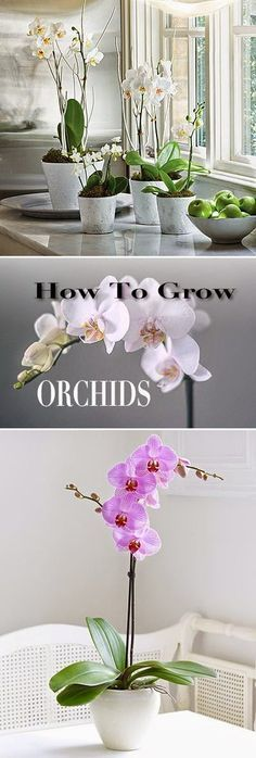 How To Grow Orchids Fragrance Orchids And Plants