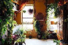 ニューヨーク在住のモデルのSUMMER RAYNE OAKESさんは、観葉植物、多肉植物、ハーブ、野菜など、500もの多種多様な植物と生活しているそうです。そんな彼女の都会で植物と共生する暮らし、覗いてみませんか?3