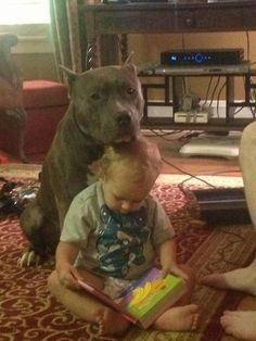 They don't call em Nanny dogs for nothin'! Pitbull