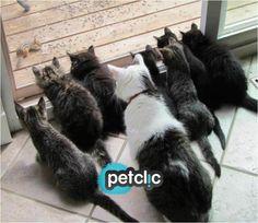 Fotos divertidas de animales #gatos