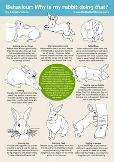 That is a nice guide Rabbit Toys, Pet Rabbit, House Rabbit, Mini Lop Rabbit, Pet Bunny Rabbits, Dwarf Bunnies, Bunny Care Tips, Rabbit Facts, Flemish Giant Rabbit
