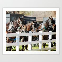 Waiting Around, A Line of Amish Horses Tied Out Together Art Print by Angelandspot - $14.00