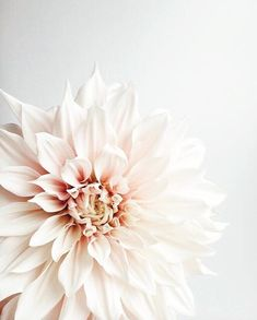 Such a very special seasonal bloom.the Cafe au Lait dahlia! Thank you so much Charmaine at for entering this month's… Pink Flowers, Beautiful Flowers, Summer Flowers, Wedding Bouquets, Wedding Flowers, Wedding Colors, Flowers Instagram, Deco Floral, Floral Arrangements