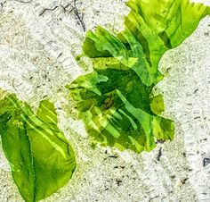 Photos - Google Photos Seaweed, Plant Leaves, Google, Plants, Photos, Pictures, Plant, Planets