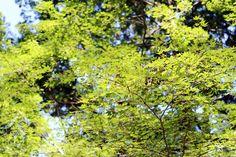 Oravanpesä: Japani 2013, Kawagoe, Kitain.