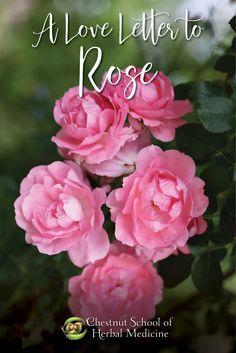 Rose's Medicinal Uses // by Ayo Ngozi Drayton  #rose #herbalife #herbalist #herbalism #herbalmedicine #medicinmaking #foraging #wildfoods