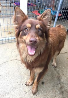 is an adoptable Border Collie searching for a forever family near West Monroe, LA. Use Petfinder to find adoptable pets in your area. Border Collie Rescue, West Monroe, Save Animals, Searching, Corgi, Adoption, Pets, Foster Care Adoption, Corgis