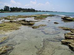 Snorkeling Point-of-Rocks, Siesta Key, Florida