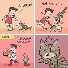 Bringing a bird home
