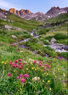 Wildflowers are in bloom in American Basin, Colorado. This has to be one of the beautiful wildflower locations in the world. Beautiful Nature Pictures, Amazing Nature, Beautiful Landscapes, Beautiful World, Beautiful Flowers, Beautiful Places, Landscape Photography, Nature Photography, English Garden Design