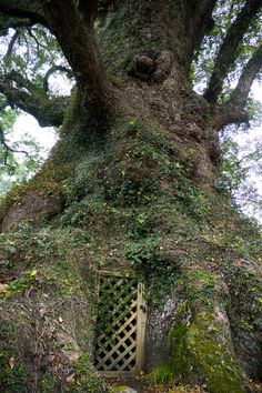 The door is attached to the biggest Tree. Kagoshima, Japan.*-*.