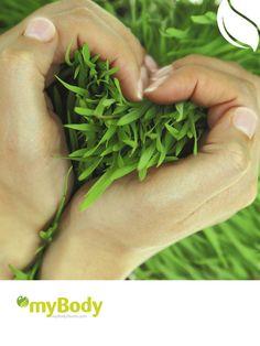 Depurar, quemar grasas o aumentar el deseo sexual. Descubre lo que las plantas pueden hacer por ti: http://magazine.mybodystores.com/belleza/green-power-el-poder-de-lo-natural?utm_source=Google&utm_medium=social&utm_content=Post%20magazin&utm_campaign=socialseptiembre