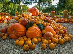"""Autumn at the Dallas Arboretum September 19 – November 2015 Featuring the nationally acclaimed Pumpkin Village, with pumpkins, gourds and squash. Named one of """"American's Best Pumpkin Festivals"""" by Fodor's Travel. Halloween Pumpkins, Fall Halloween, Fall Pumpkins, It's The Great Pumpkin, October Country, Get In The Mood, Dallas Arboretum, Event Calendar, Fall Season"""