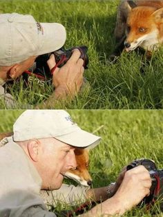 Let me Check This Picture, Funny Animals and Fox. Funny Cute, The Funny, Hilarious, Tumblr Funny, Funny Memes, Animal Pictures, Funny Pictures, Funny Pics, Awkward Pictures