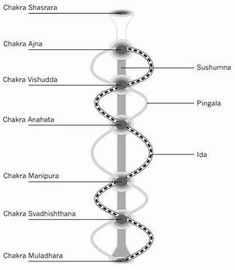 chakras and the major nadis ida pingala  sushumna