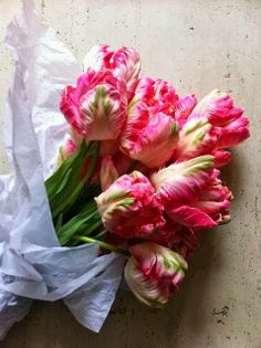parrot tulips My Flower, Fresh Flowers, Spring Flowers, Beautiful Flowers, Bloom, Parrot Tulips, Pink Tulips, Tulips Flowers, Colorful Roses