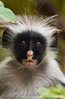 1697 Best monkeys, gorilla's images in 2019 | Monkeys