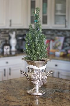 Silver champagne chiller found at Goodwill filled with a small rosemary tree for the holiday season - repurpose - thrift - Christmas Kitchen Decorating Ideas - I have a silver urn, from one of our horses wins, perfect use for it Christmas Kitchen, Little Christmas, Rustic Christmas, All Things Christmas, Winter Christmas, Vintage Christmas, Merry Christmas, Christmas Ornaments, Rosemary Christmas Tree
