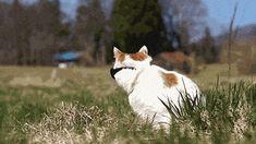 Gatos são mágicos. Isso pode ser provado. Cientificamente.