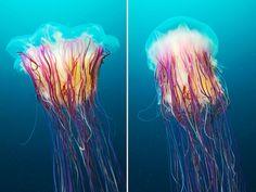 Amazing Jellyfish Photos by Alexander Semenov | Bored Panda