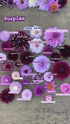 Types Of Flowers, Cut Flowers, Colorful Flowers, Beautiful Flowers, Dahlia, Dalia Flower, Flower Farmer, Cut Flower Garden, Zinnias