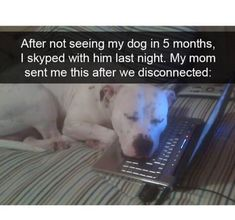 Just A Bunch Of Funny Animal Memes #dogsfunnymeme