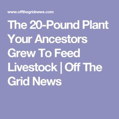 The 20-Pound Plant Your Ancestors Grew To Feed Livestock | Off The Grid News