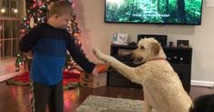 In this video Noah trains (and talks!) to our Goldendoodle, Jake. I love hearing how well Noah's speech is coming along, and how well the dog listens to him.