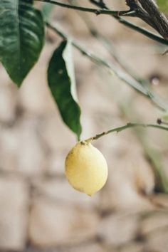 summer in France - Provence - citron - lemon - south of France - été Provence France, South Of France, Brunch, Lemon, Summer, Inspiration, Seasons, Summer Time, Biblical Inspiration
