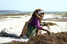 Gathering seaweed, Indonesia